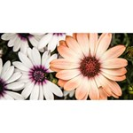Beautiful Colourful African Daisies BELIEVE 3D Greeting Card (8x4)  Back