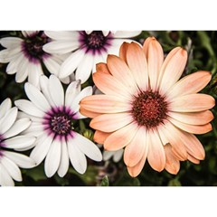 Beautiful Colourful African Daisies Birthday Cake 3D Greeting Card (7x5)