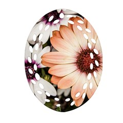 Beautiful Colourful African Daisies Ornament (oval Filigree)