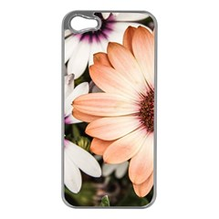 Beautiful Colourful African Daisies Apple iPhone 5 Case (Silver)