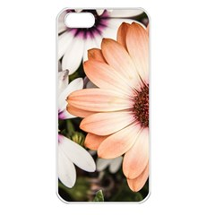 Beautiful Colourful African Daisies Apple iPhone 5 Seamless Case (White)