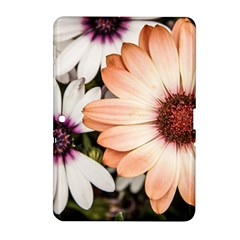 Beautiful Colourful African Daisies Samsung Galaxy Tab 2 (10.1 ) P5100 Hardshell Case