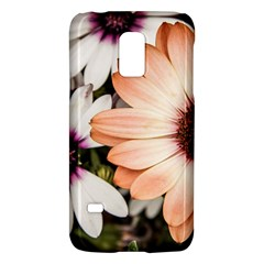 Beautiful Colourful African Daisies Galaxy S5 Mini