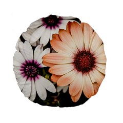 Beautiful Colourful African Daisies Standard 15  Premium Flano Round Cushions