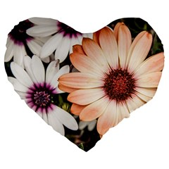 Beautiful Colourful African Daisies Large 19  Premium Flano Heart Shape Cushions