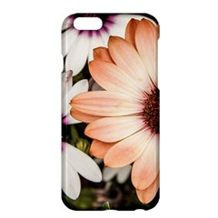 Beautiful Colourful African Daisies Apple iPhone 6 Plus/6S Plus Hardshell Case