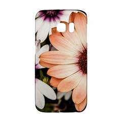 Beautiful Colourful African Daisies Galaxy S6 Edge