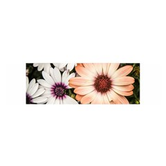 Beautiful Colourful African Daisies Satin Scarf (oblong)