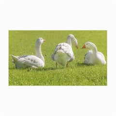 Group Of White Geese Resting On The Grass Collage 12  X 18