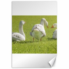 Group of White Geese Resting on the Grass Canvas 20  x 30