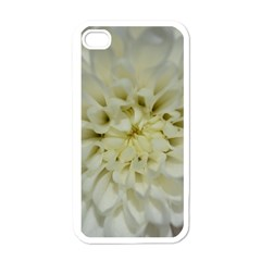 White Flowers Apple iPhone 4 Case (White)