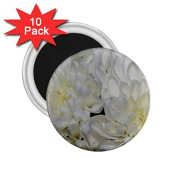 White Flowers 2 2.25  Magnets (10 pack)
