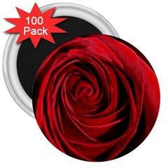 Beautifully Red 3  Magnets (100 pack)