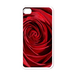 Beautifully Red Apple iPhone 4 Case (White)