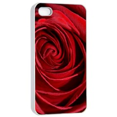 Beautifully Red Apple iPhone 4/4s Seamless Case (White)