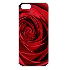 Beautifully Red Apple iPhone 5 Seamless Case (White)