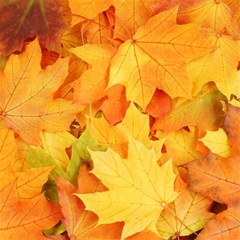 Yellow Maple Leaves Magic Photo Cubes