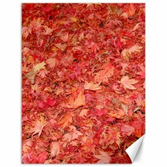 RED MAPLE LEAVES Canvas 12  x 16