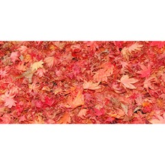 Red Maple Leaves You Are Invited 3d Greeting Card (8x4)