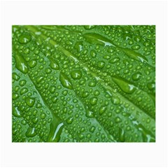 GREEN LEAF DROPS Small Glasses Cloth