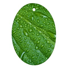 Green Leaf Drops Oval Ornament (two Sides)