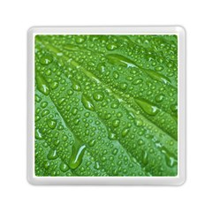 GREEN LEAF DROPS Memory Card Reader (Square)