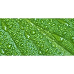 Green Leaf Drops You Are Invited 3d Greeting Card (8x4)