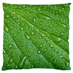 GREEN LEAF DROPS Standard Flano Cushion Cases (One Side)