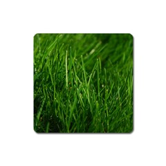 GREEN GRASS 1 Square Magnet