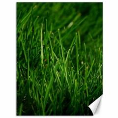 GREEN GRASS 1 Canvas 36  x 48