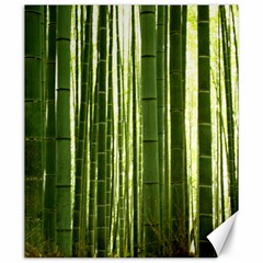 BAMBOO GROVE 2 Canvas 20  x 24