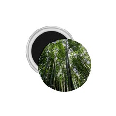 BAMBOO GROVE 1 1.75  Magnets