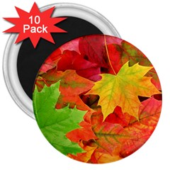 AUTUMN LEAVES 1 3  Magnets (10 pack)