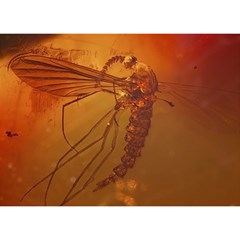 Mosquito In Amber Birthday Cake 3d Greeting Card (7x5)