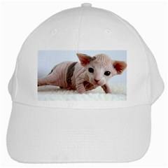 Sphynx Kitten White Cap