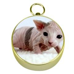 Sphynx Kitten Gold Compasses