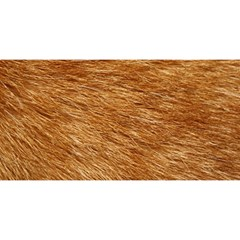 Light Brown Fur You Are Invited 3d Greeting Card (8x4)
