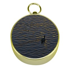 Lonely Duck Swimming At Lake At Sunset Time Gold Compasses