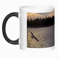 Intercoastal Seagulls 3 Morph Mugs