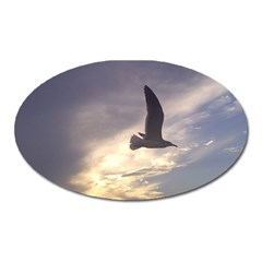 Seagull 1 Oval Magnet