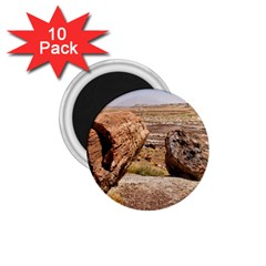 PETRIFIED DESERT 1.75  Magnets (10 pack)