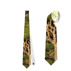 Socotra, Yemen Neckties (two Side)