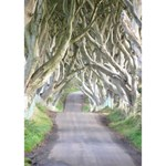 DARK HEDGES, IRELAND THANK YOU 3D Greeting Card (7x5)  Inside