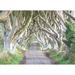 DARK HEDGES, IRELAND THANK YOU 3D Greeting Card (7x5)  Back