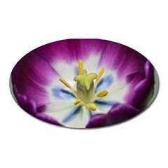 Purple Beauty Oval Magnet