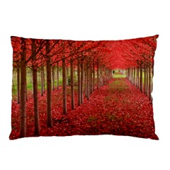 Avenue Of Trees Pillow Cases