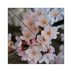 Sakura Acrylic Tangram Puzzle (6  X 6 )