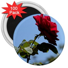 RED ROSE 2 3  Magnets (100 pack)