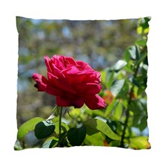 RED ROSE 1 Standard Cushion Cases (Two Sides)