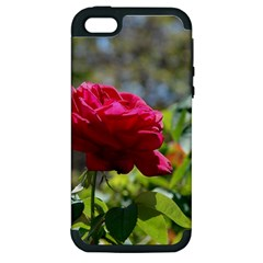 RED ROSE 1 Apple iPhone 5 Hardshell Case (PC+Silicone)